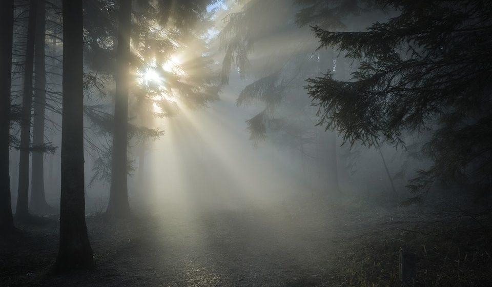 Пропавшую в лесу под Барановичами пенсионерку нашли спустя три дня мертвой