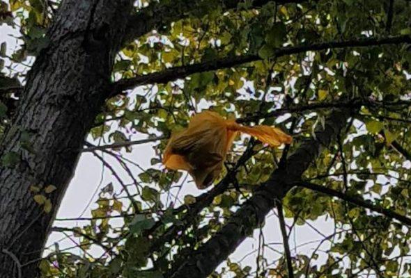 В Полоцке кто-то высоко на дереве повесил пакет со щенками. Горожане и МЧС спасли их