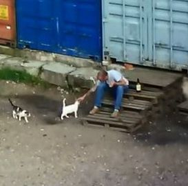 Душил и бил кота о лестницу. В Гродно возбуждено уголовное дело о жестоком обращении с животным