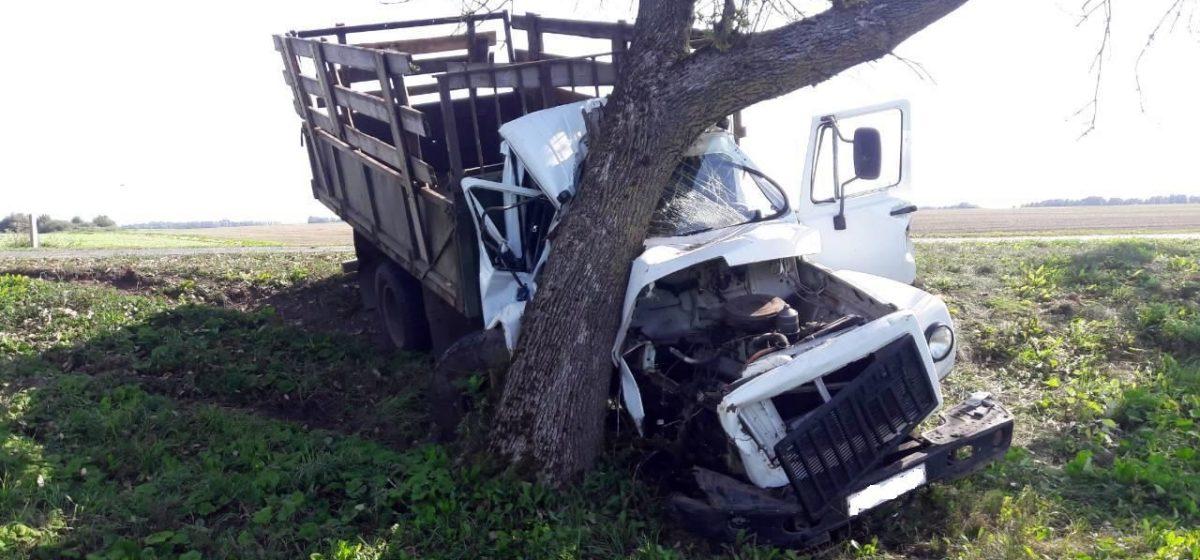 Под Гродно грузовик со свиньями вылетел с дороги и врезался в дерево