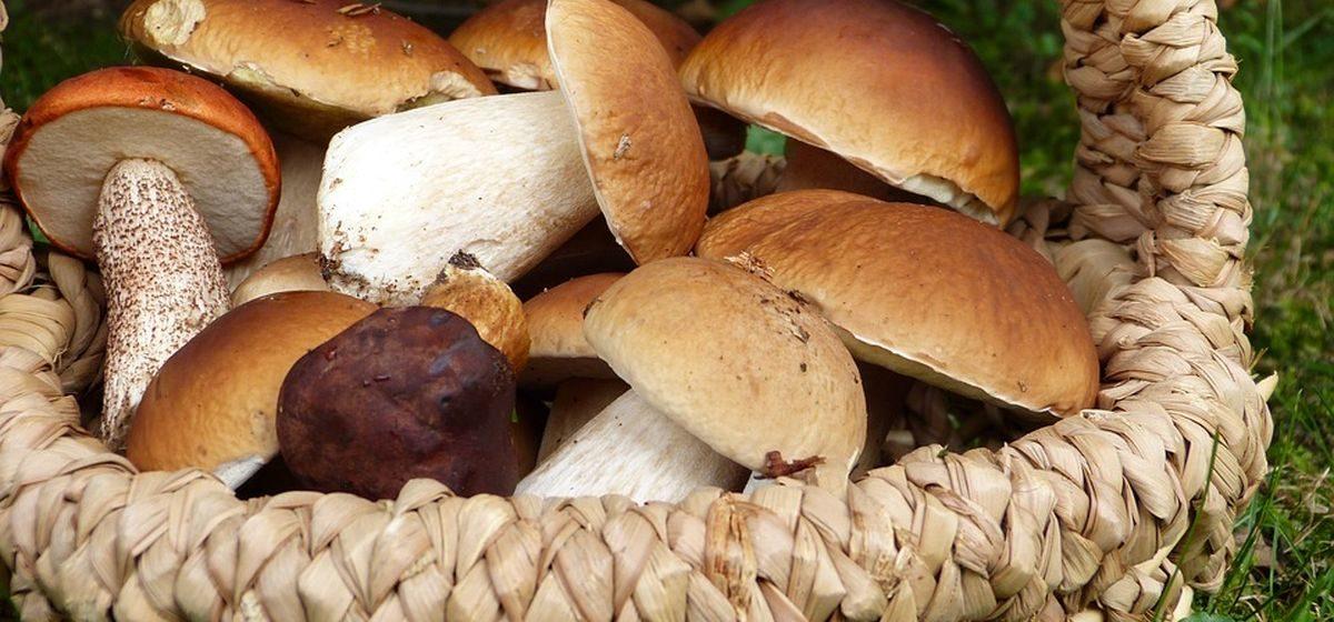 Трое детей и 47 взрослых отравились в Беларуси грибами в этом году
