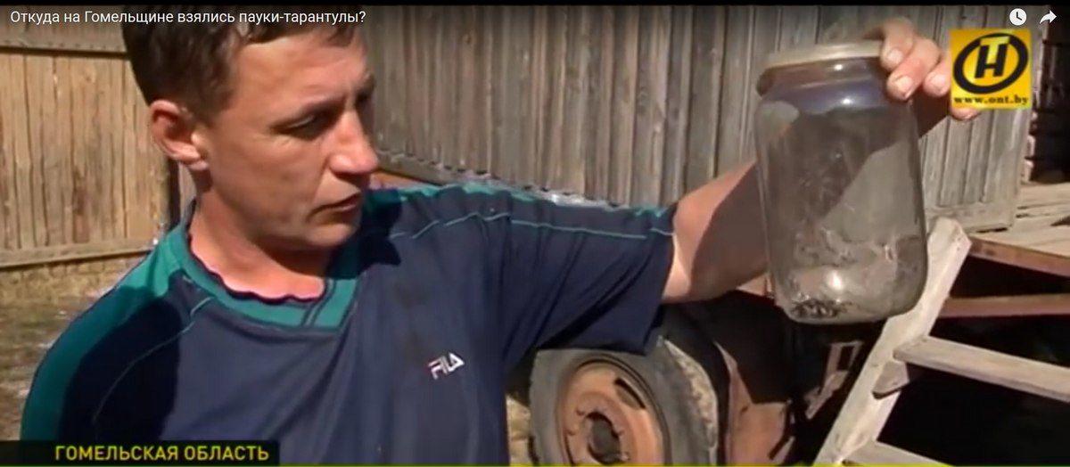 Огромные пауки-тарантулы пробираются в дома жителей деревни на Гомельщине (видео)
