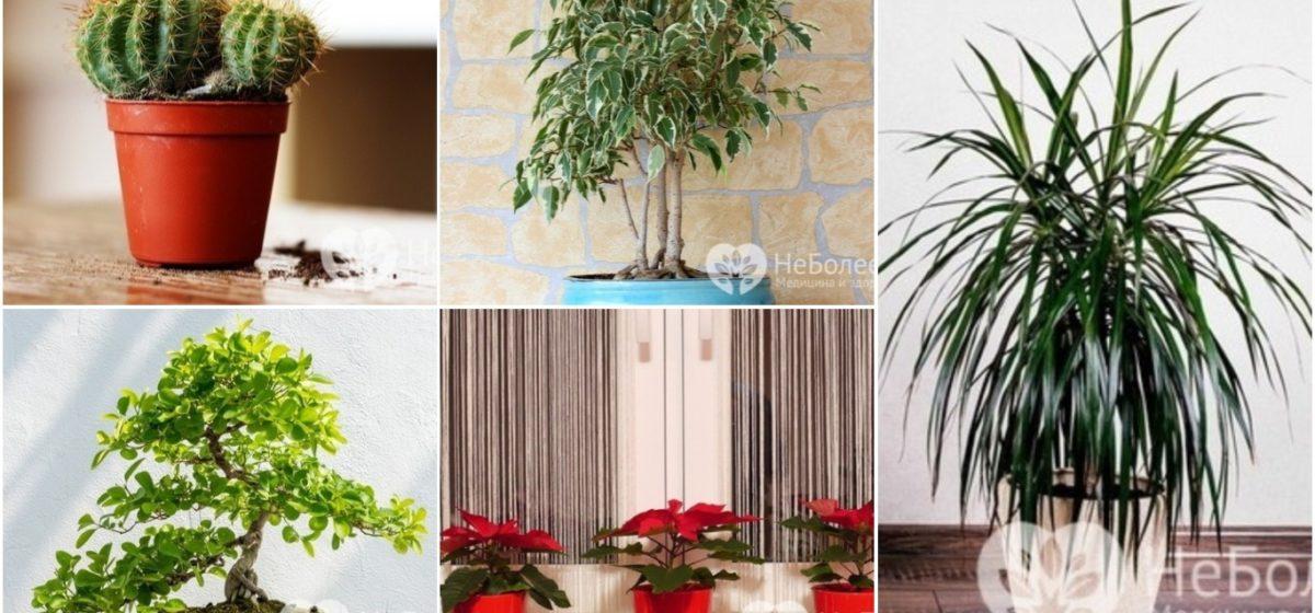 Двенадцать комнатных растений, которым не место в детской