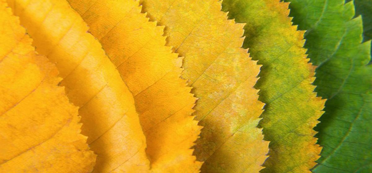 Как не захандрить осенью?*