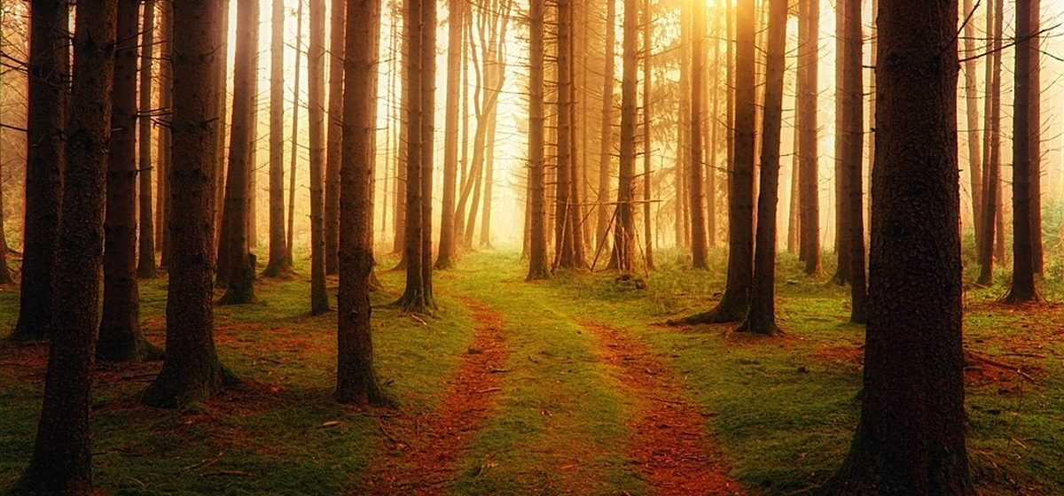 В Барановичском районе сняли запрет на посещение леса