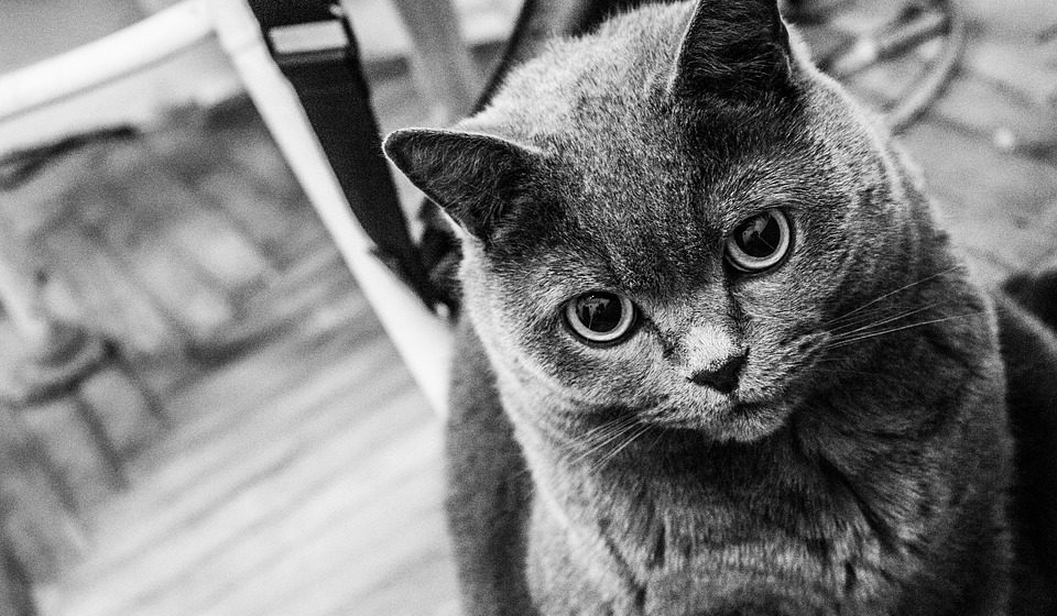 В Ганцевичском районе пьяный мужчина забил кота ногами. Теперь ему грозит до трех лет тюрьмы