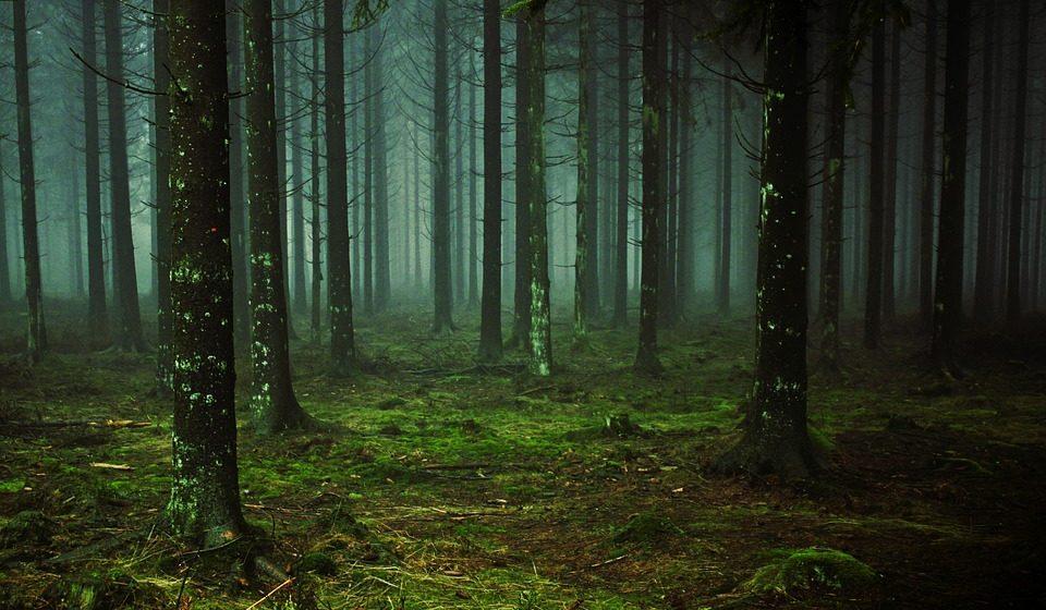В лесу под Витебском нашли двух женщин и ребенка, которые пошли за ягодами в Псковской области и потерялись