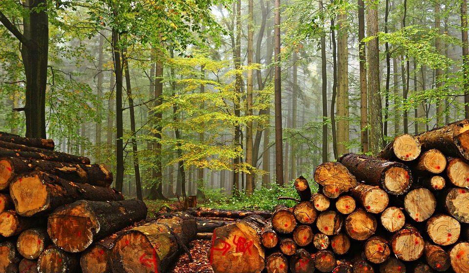 Четыре жителя Барановичей заплатят почти 20 тысяч рублей за спиленные деревья