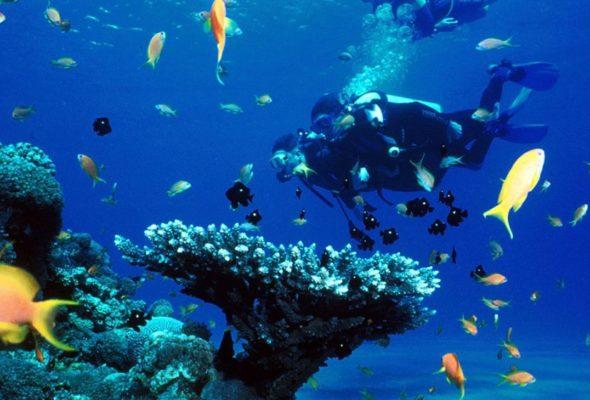 Ваша успешная подводная охота