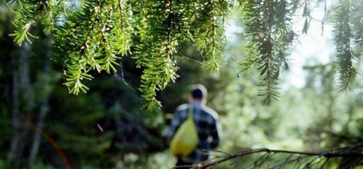 В лесу под Бобруйском нашли труп мужчины. Его искали три недели