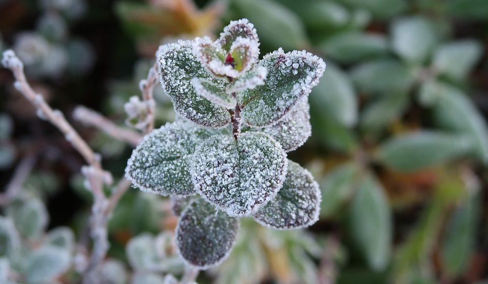 Метеорологи рассказали о предстоящих заморозках в Барановичах