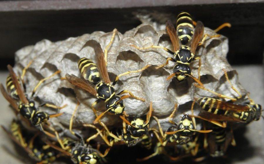 В Слуцке осы напали на детей