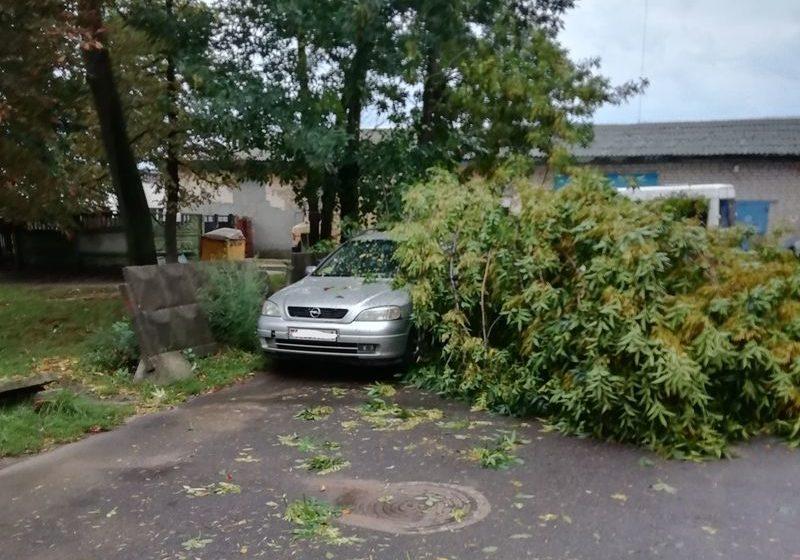 Фотофакт. В Барановичах сломанное стихией дерево упало на автомобиль