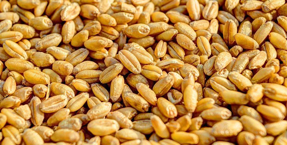 В Барановичском районе животновод украл более 100 кг пшеницы с предприятия, на котором работал