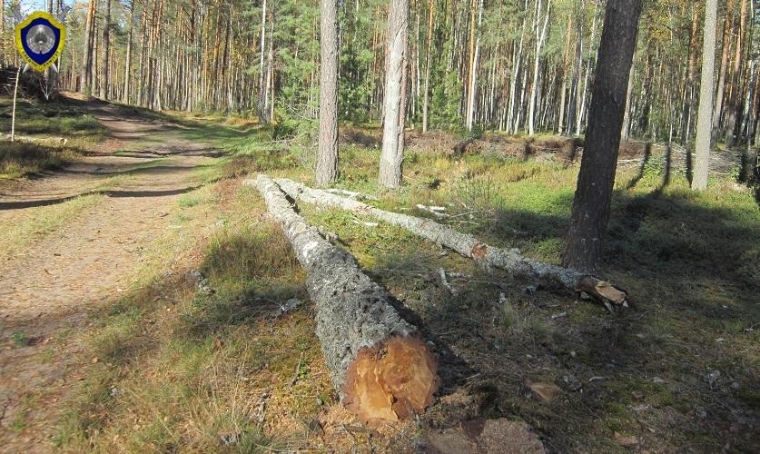 В Вилейском районе погиб лесоруб