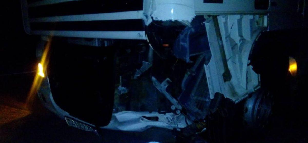 Под Кобрином лось вышел на дорогу: пострадали четыре машины и три человека