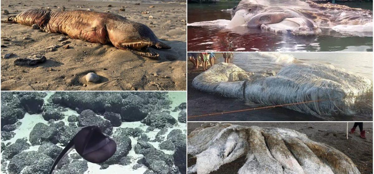 Щупальца, волосы и зубы. ТОП-5 ужасных неопознанных монстров, которых за последние годы выбросило из океана на берег