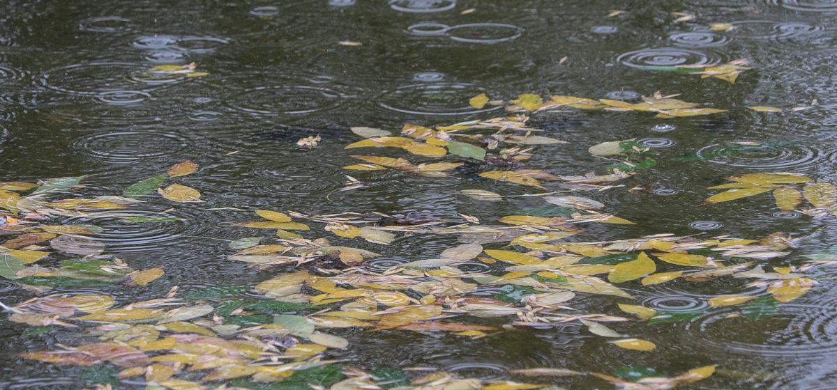 Погода на 26 октября: дожди, возможен мокрый снег