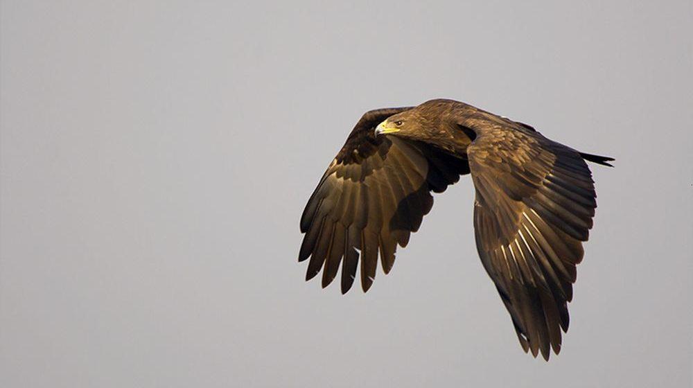 В Беларуси выбрали птицу 2019 года. И это самый редкий хищник в Европе