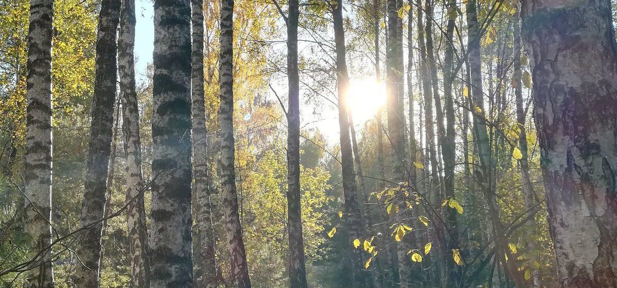 До +21 °С и без дождей будет в Беларуси 17 октября