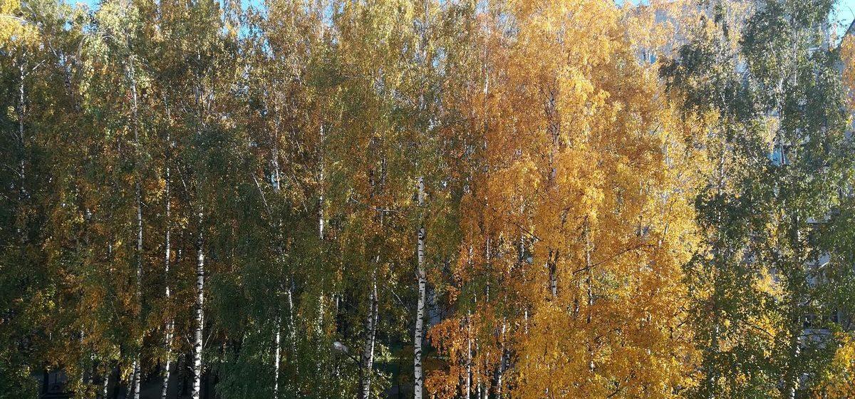 До +22°С ожидается в Беларуси 18 октября