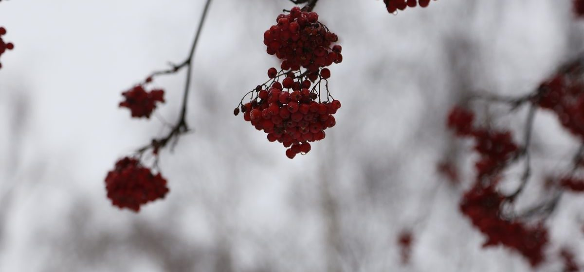 Погода 6 февраля: ночью заморозки, днем выше нуля