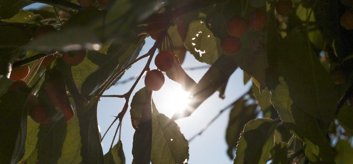 Погода в Беларуси на 13 октября: солнечно и без осадков