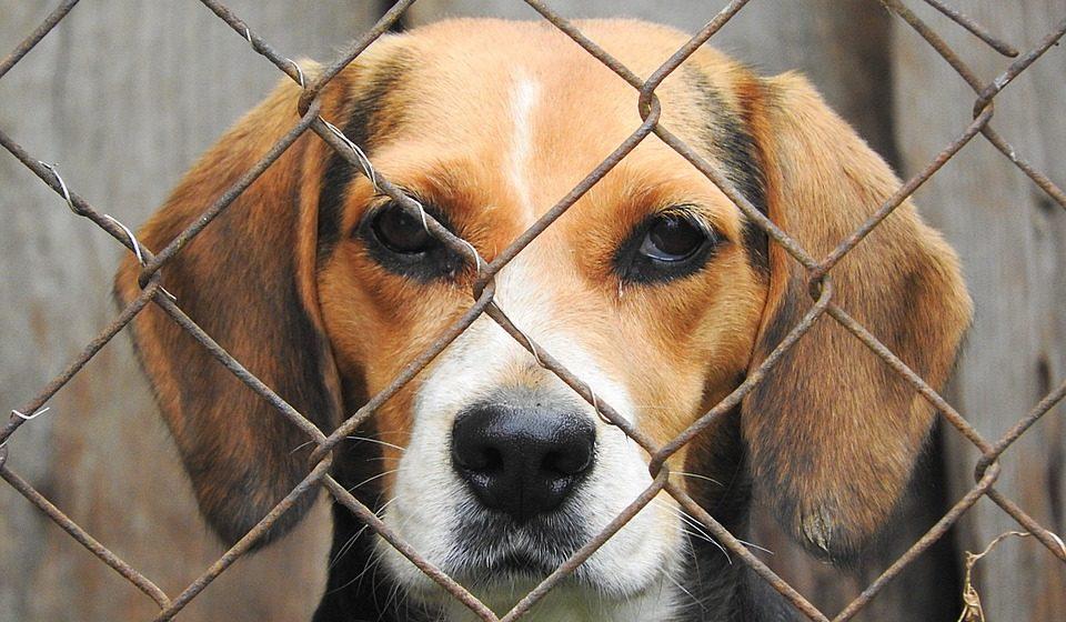 Проект приюта для животных обойдется Барановичам почти в 20 тысяч долларов
