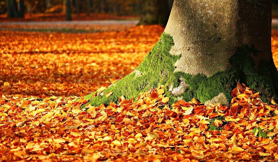 В Барановичах пройдет акция «Чистый лес»
