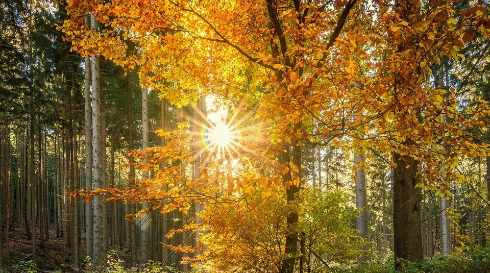 В первое воскресенье октября ожидается до 22 градусов тепла