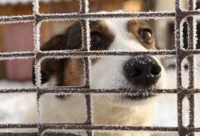 Приют для бездомных животных начинают строить в Барановичах. Помочь финансово просят всех желающих