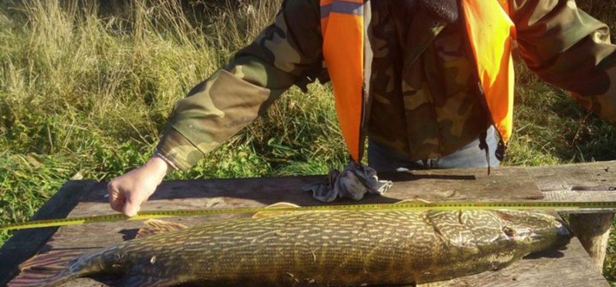 Фотофакт. На Дубровском водохранилище двое рыбаков поймали 13-килограммовую щуку