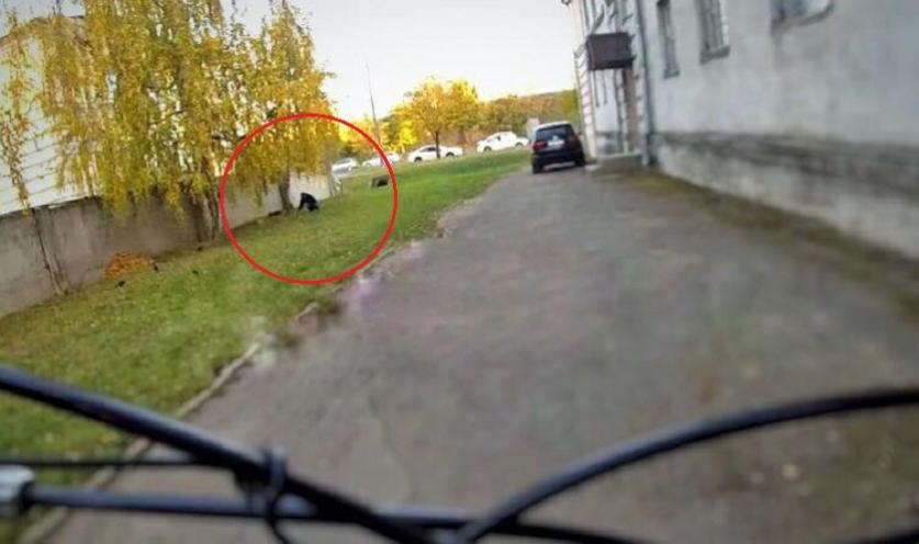 В Минске велосипедист заметил мужчину, который искал «закладку», снял все на видео и сообщил об этом в милицию (видео)