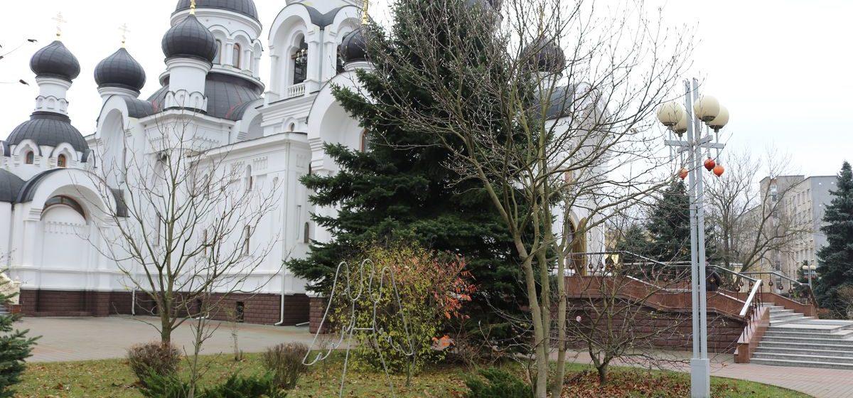 В Барановичах магнолию, которая росла во дворе дома, определенного под снос, перевезли на новое место