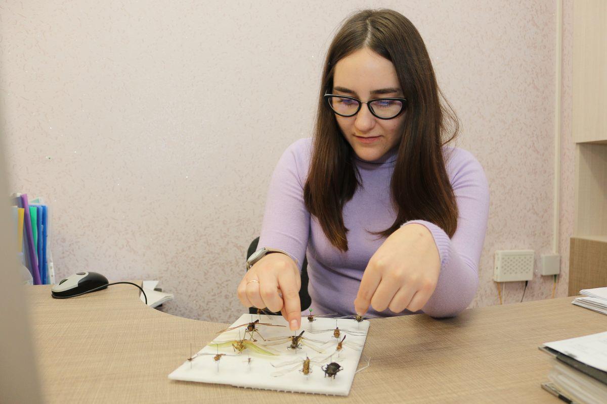 Екатерина Ефимчик показывает часть экспонатов из своей коллекции. Всего она собрала около 70 стрекоз. Фото: Александр ЧЕРНЫЙ