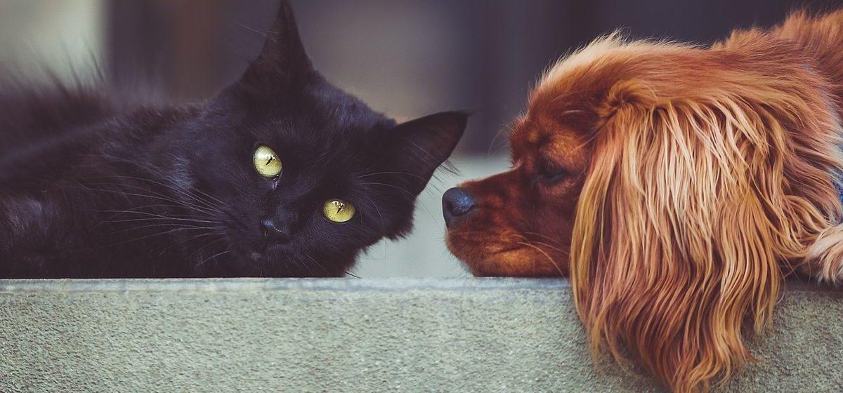 Тест. Кто вы – кошатник или собачник?
