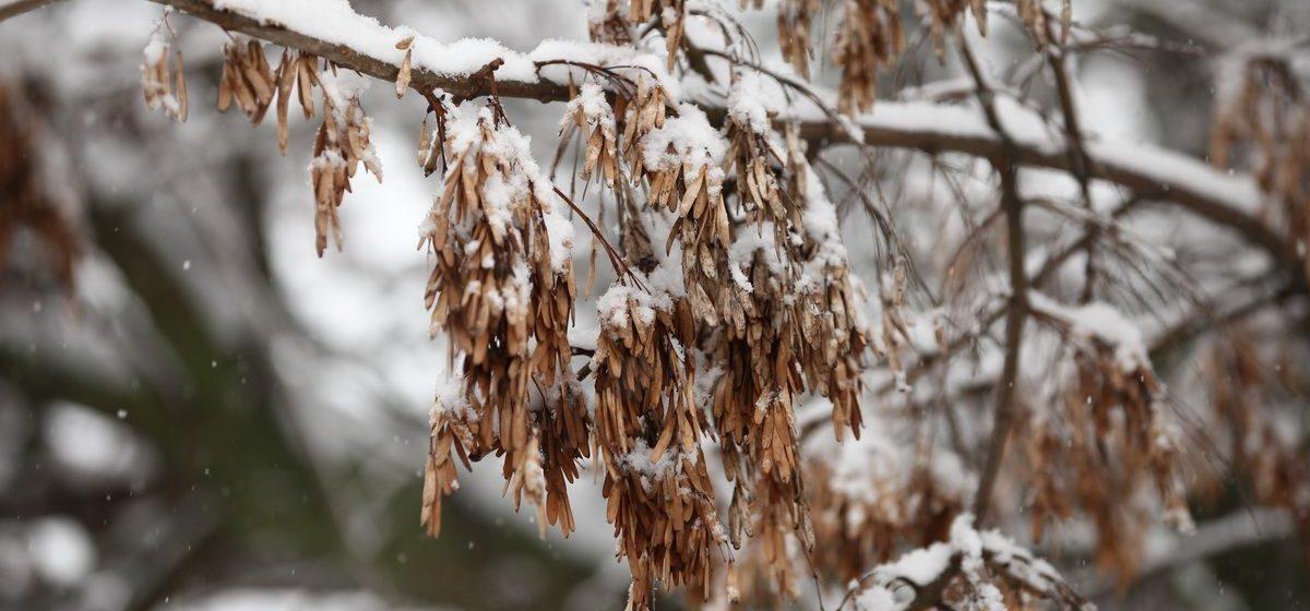 До 13 мороза и гололед обещают синоптики 21 января