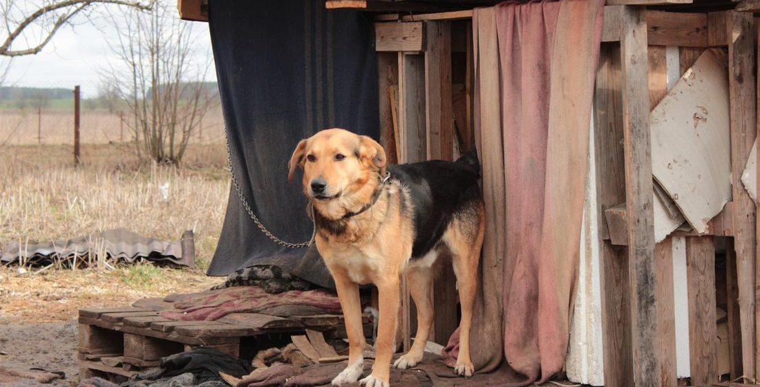 В Барановичах мужчина застрелил собаку, которая укусила его за палец. Милиция возбудила уголовное дело