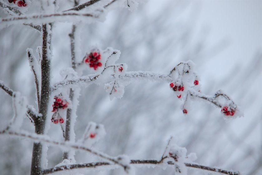 До -20°С ожидается в Беларуси 29 ноября