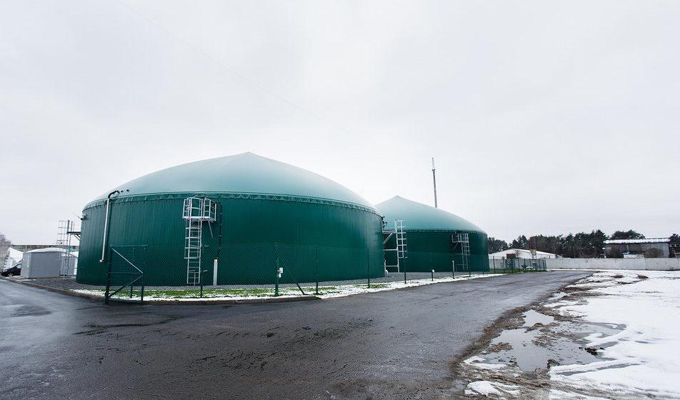 Литовцы построили в Беларуси пять электростанций, работающих на коровьих лепешках