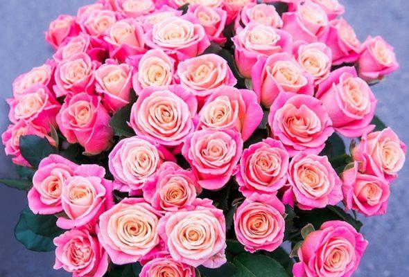 Цветочный сюрприз для настроения