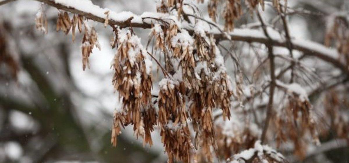 Какой будет погода в понедельник, 10 декабря