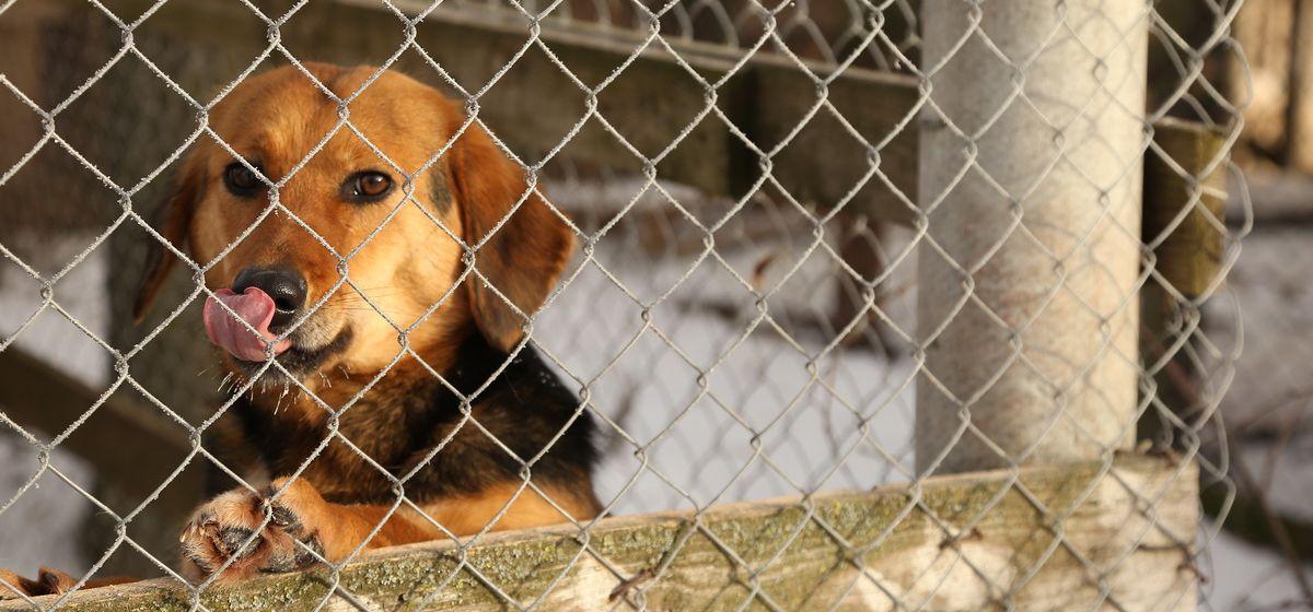 Когда в Барановичах построят приют для бездомных животных и каким он будет