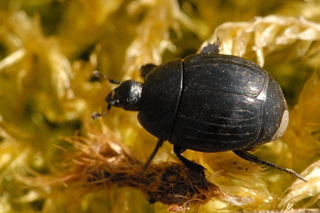 В Барановичах пройдет «лекция-страшилка» про жуков