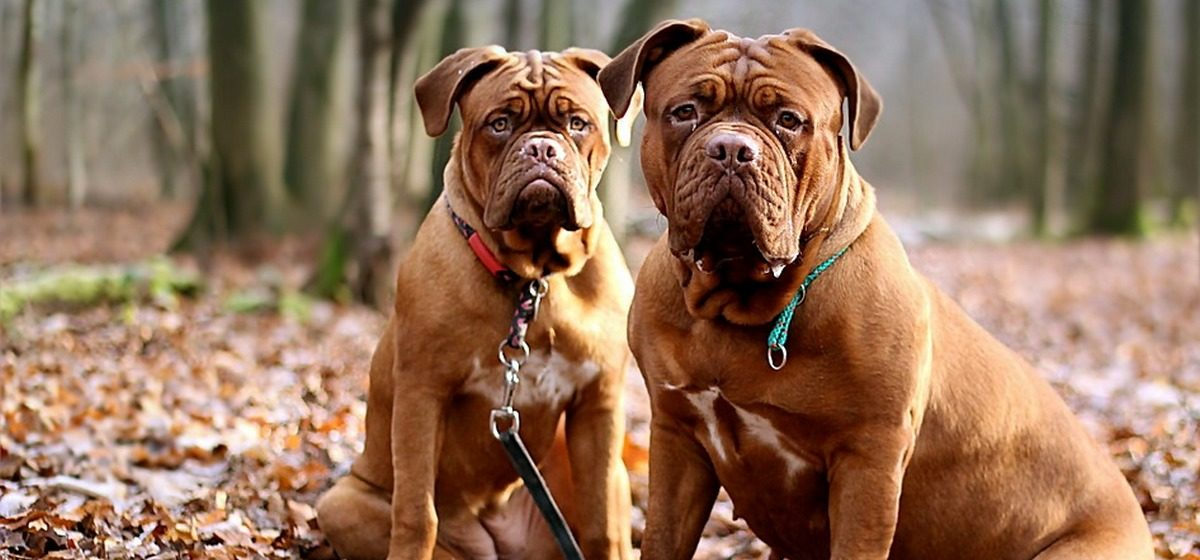 Налоговая хочет активнее взяться за владельцев собак, которые не платят налоги за своих питомцев