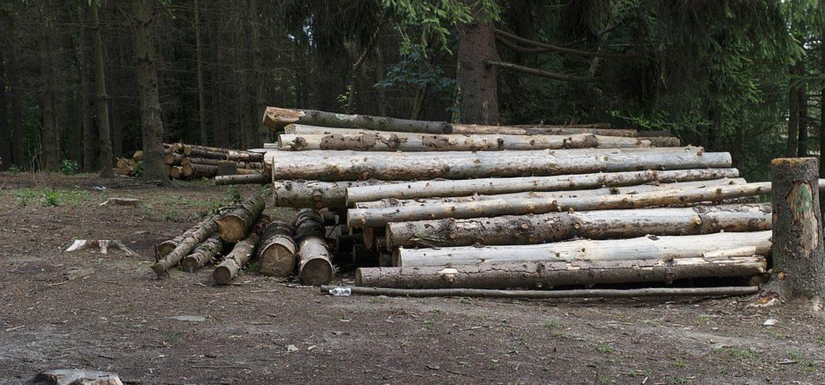 Для населения упростят процедуру заготовки дров