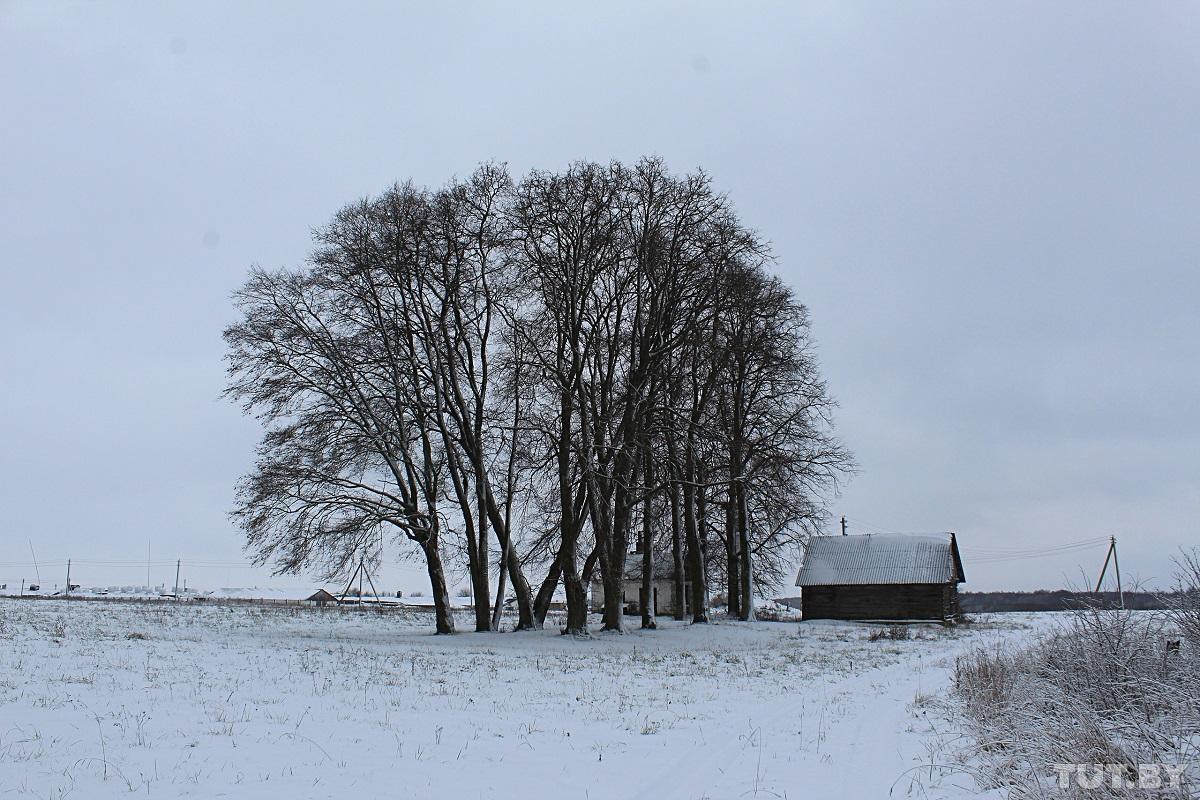 Деревья, посаженные репрессированными. Фото: Сергей СОЛОНКЕВИЧ