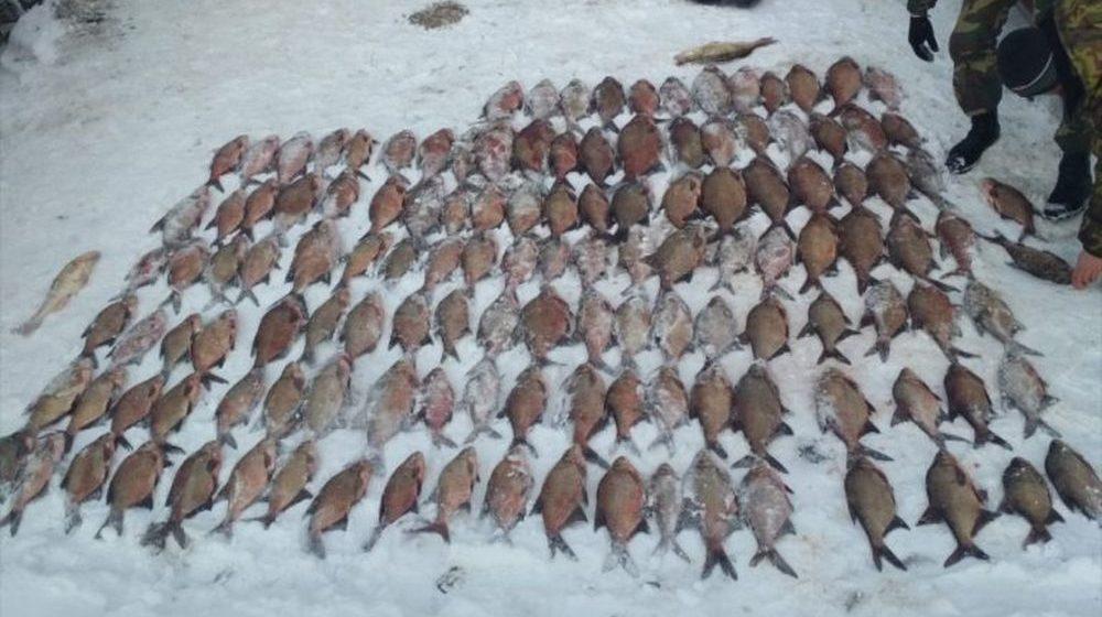 Гродненские браконьеры наловили сетями рыбу на 11 тысяч рублей и уголовную статью