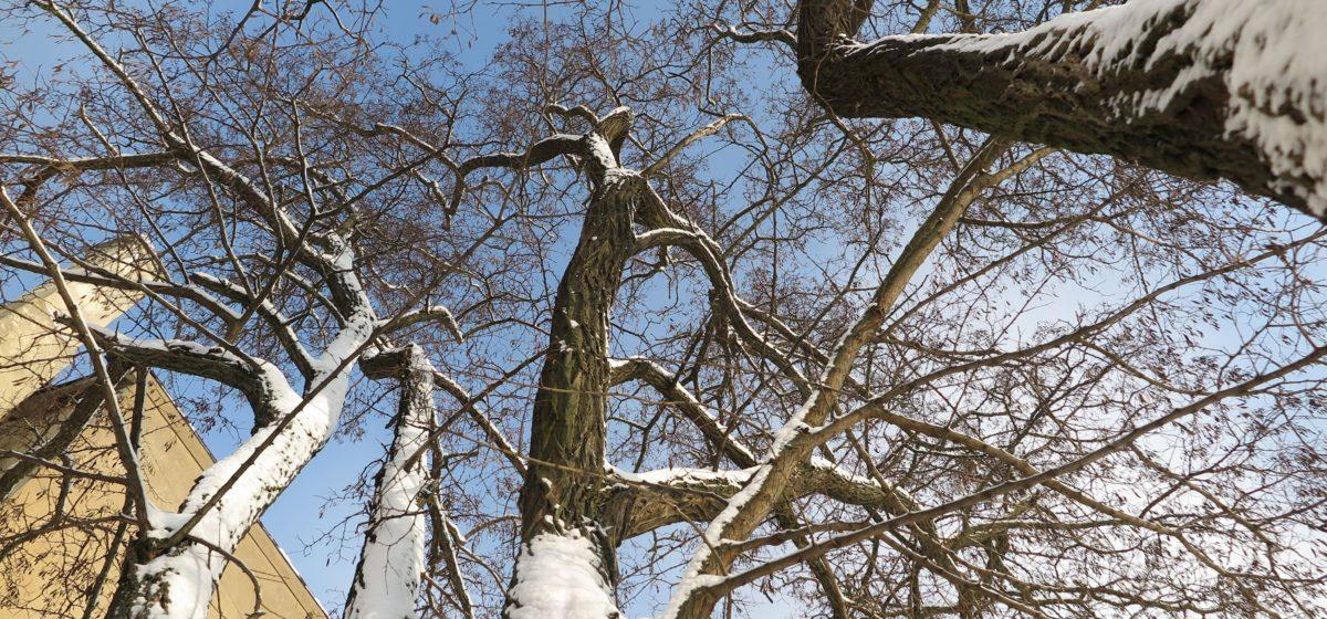 Сохранится ли мороз в Барановичах в выходные