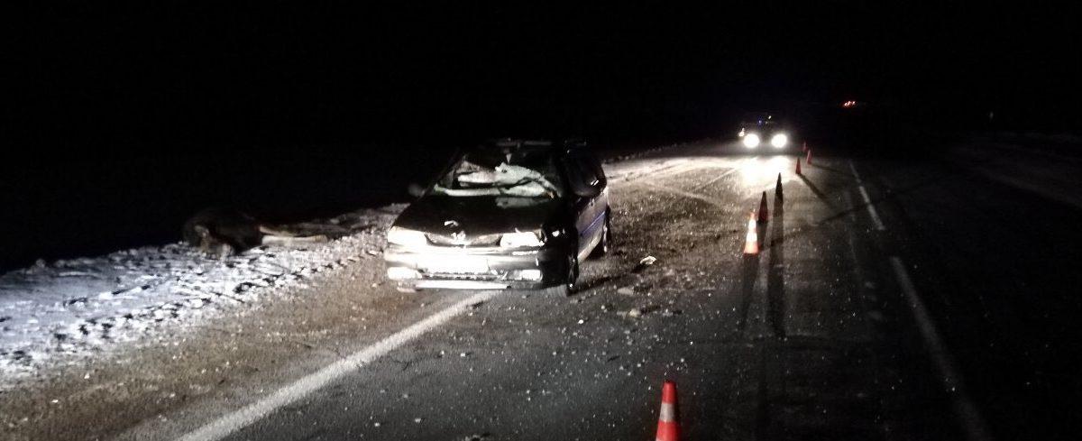 Легковушка сбила лося под Витебском, пассажирка машины в больнице (фотофакт)